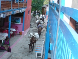 Himalayan mule trains