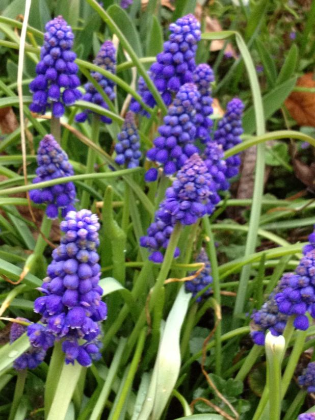 Spring flowers pics and names wallsmiga name of purple spring flowers magiel info mightylinksfo