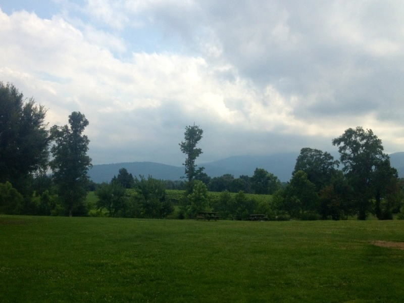Vineyard in the Blue Ridge Mountains