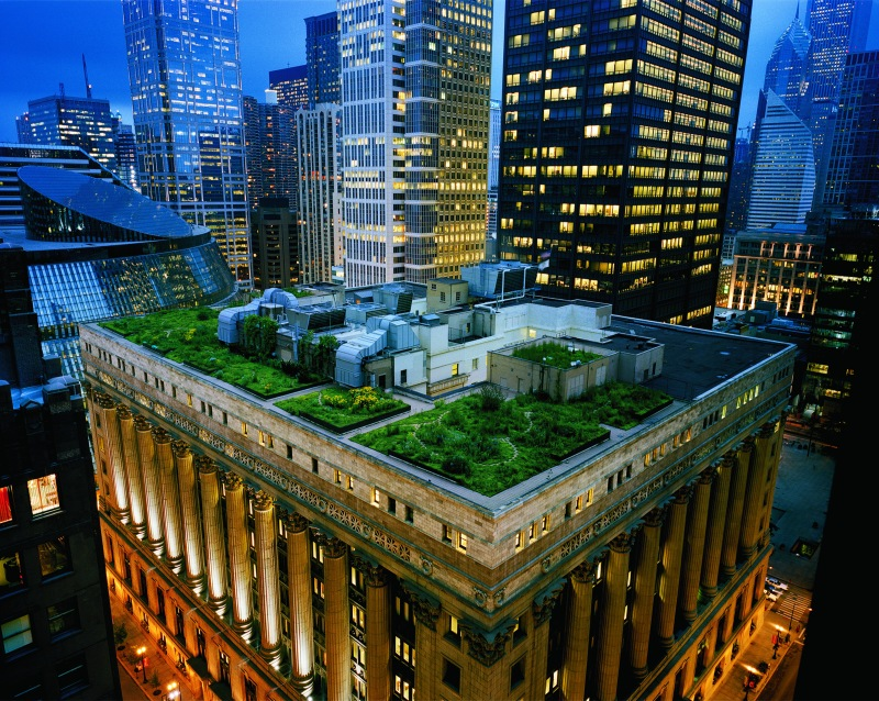 """Thousands of grasses and plants were used to create Chicago City Hall's award-winning rooftop. Photo credit: Diane Cook/National Geographic """"Women of Vision"""" Exhibit"""