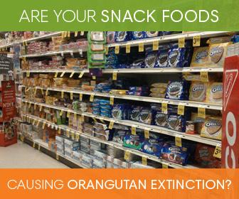 Photo credit: Rainforest Action Network