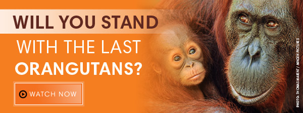 Photo credit: Rainforest Action Network