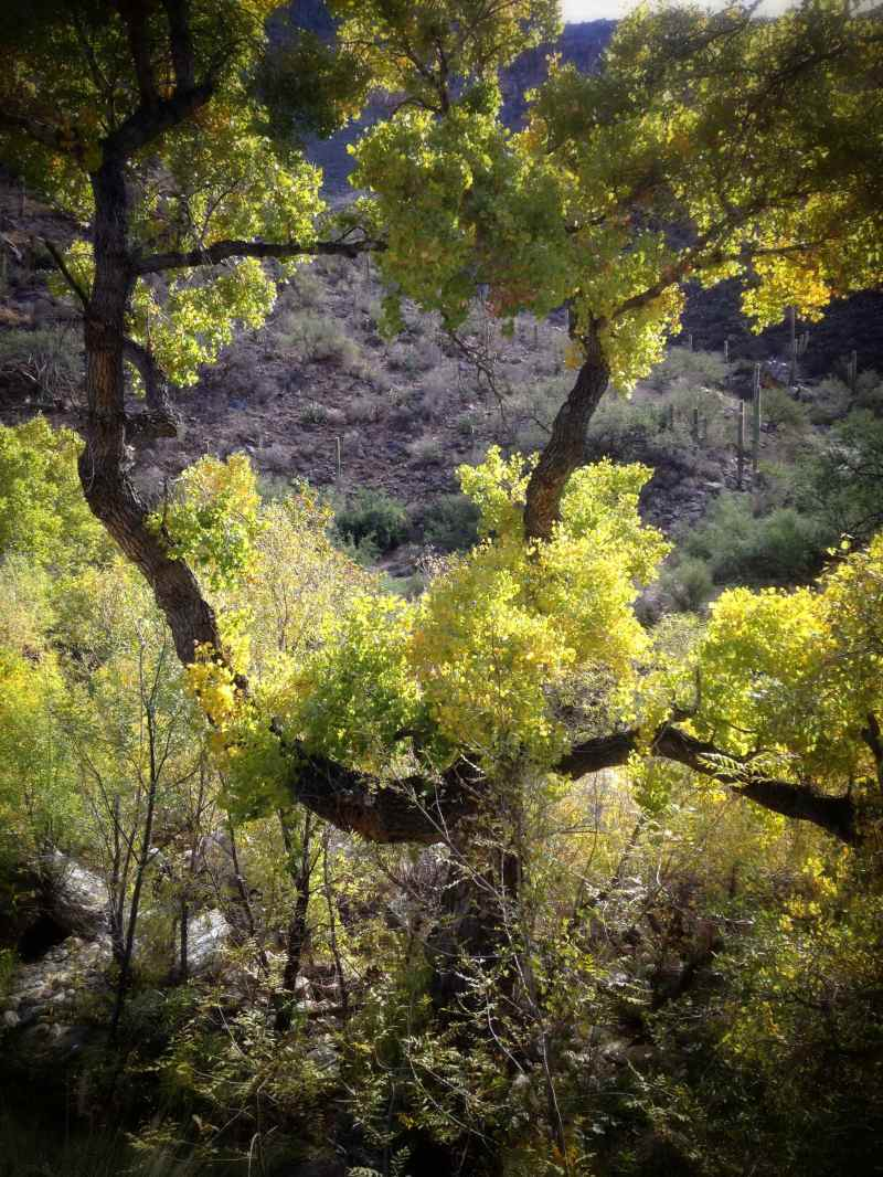 Sabino Canyon. Tucson, Arizona