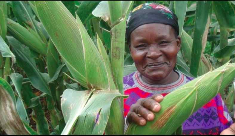 Studies show that when women have property rights, such as this Kenyan woman, they are more likely to invest their profits from increased production into the family—mainly in education and health. Photo credit: USAID
