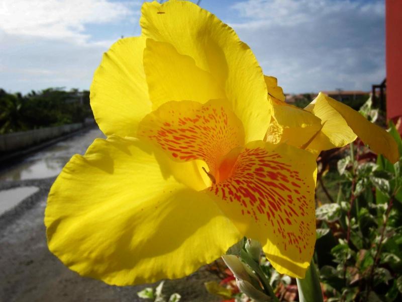 brilliant yellow flower