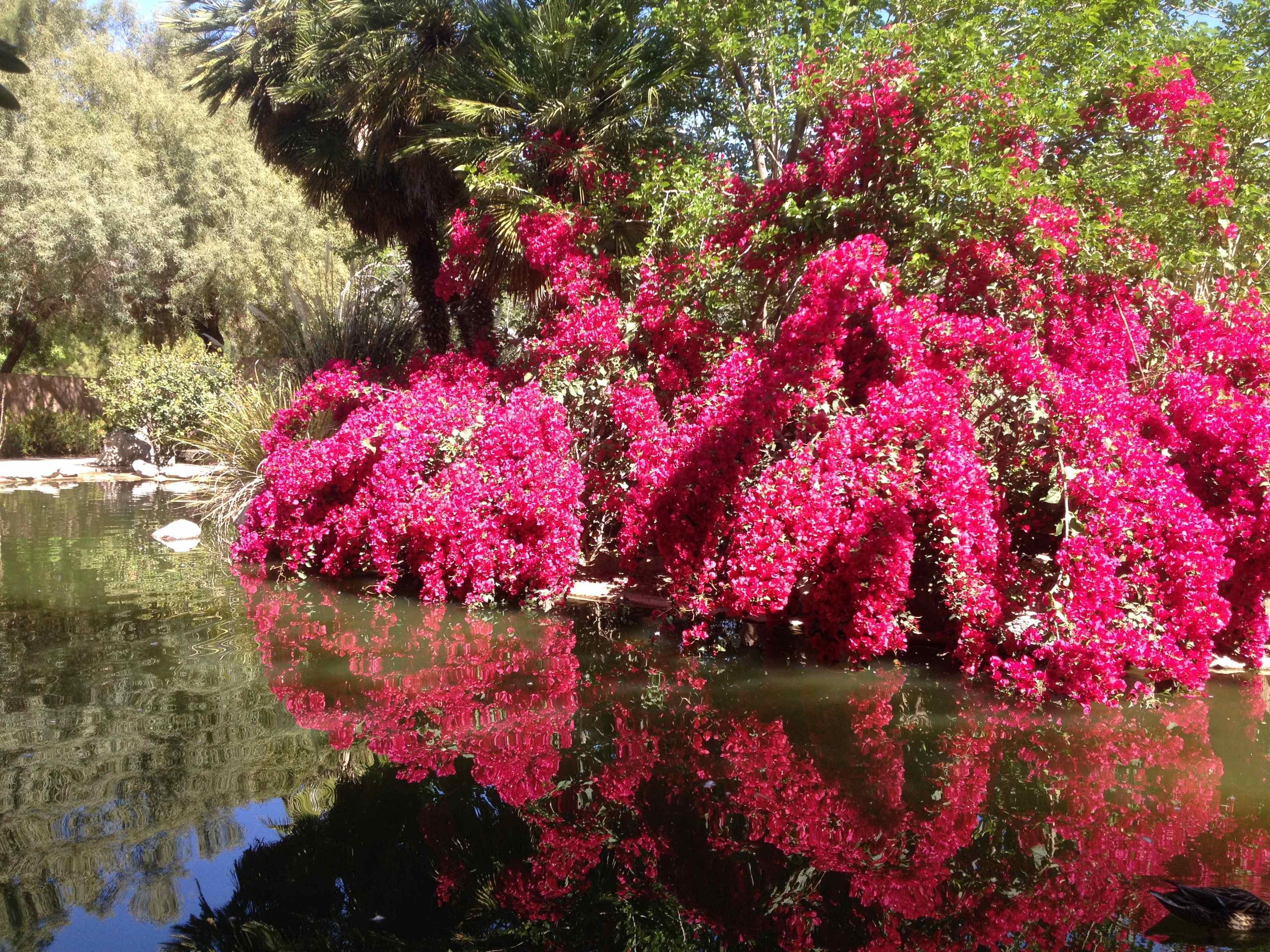 Springtime in the Desert | Thirdeyemom
