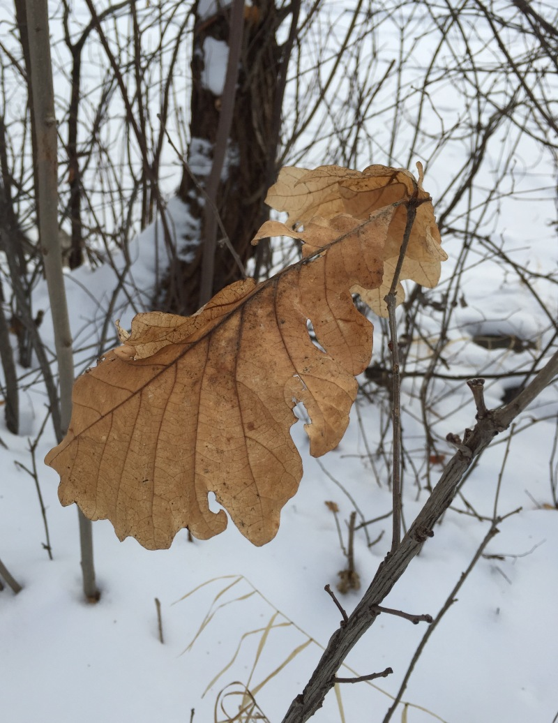 A lone leaf remains on a barren tree.