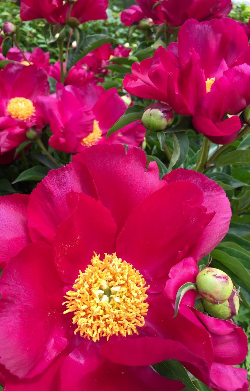 Minnesota Flowers