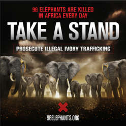 96Elephants_TakeaStand2