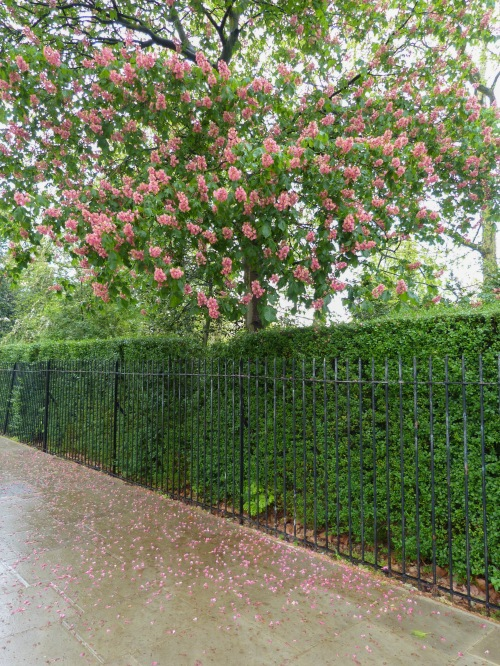 Kensington Garden, London