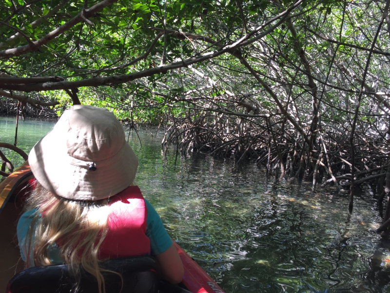 The mangroves get thicker and thicker as you move inside the narrow passageways