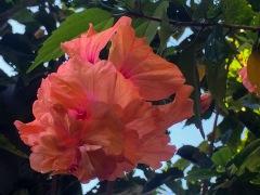 Some of the gorgeous flowers surrounding Xiña's property.