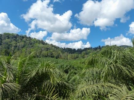 Driving in the Osa Peninsula, Costa Rica