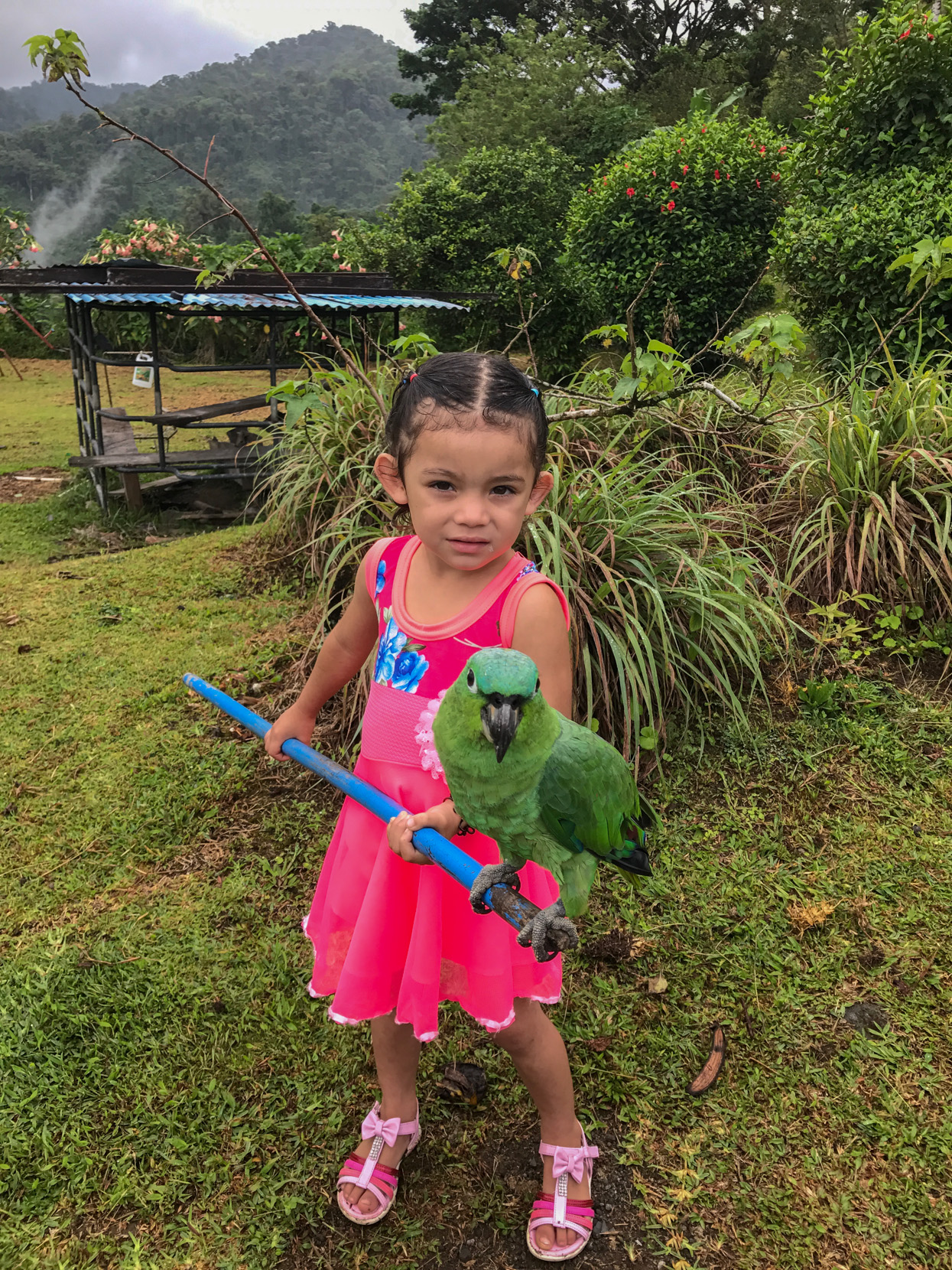 Our family costa rican adventure a stay at a farm near arenal